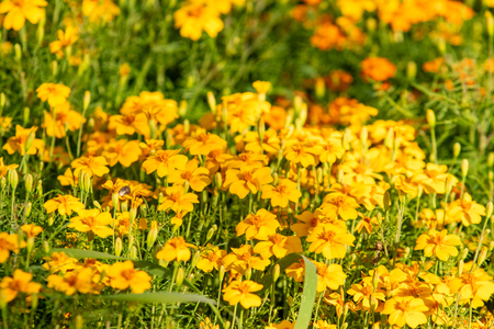 bright autumn flowers nature landscape Stock Photo - 124978788