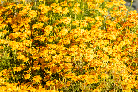 bright autumn flowers nature landscape Standard-Bild - 124979271