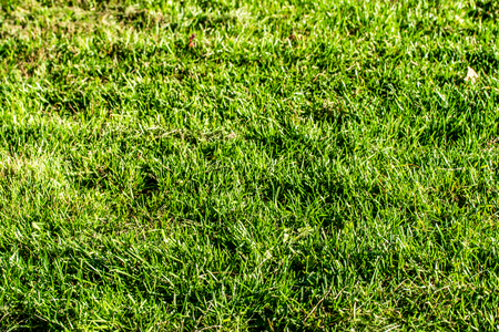 green grass background focus on the center Imagens - 124979308