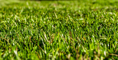green grass background focus on the center Imagens