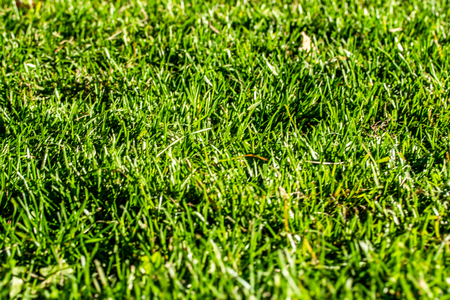 green grass background focus on the center Imagens - 124979584
