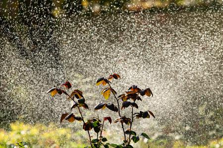 defocused, splashing water, blurred drops bokeh nature