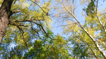 Blätter von Bäumen Blick von unten in den Himmel, Herbstlandschaft