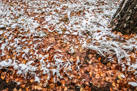 autumn leaves grass in the snow