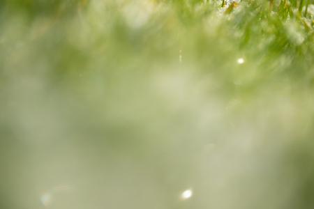 green grass snow blurred background bokeh