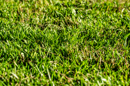 green grass background focus on the center Stock Photo