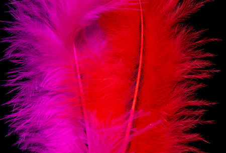 bright colored feathers close-up as a background