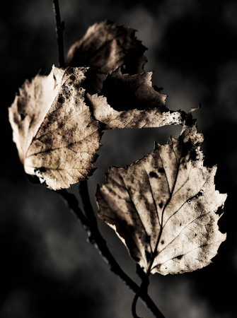 abstract dry leaves close up art grunge background