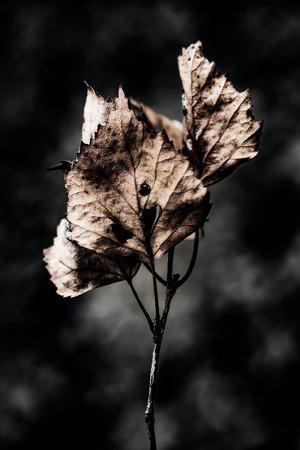 foglie secche astratte close up arte grunge background