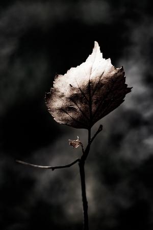 foglie secche astratte close up arte grunge background Archivio Fotografico