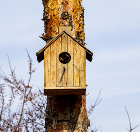 Wooden birdhouse on the tree, spring closeup.