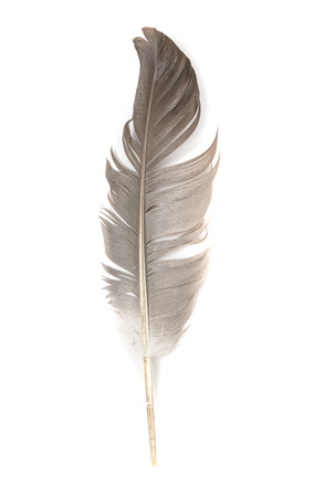 Blue bird feather isolated on white background. Reklamní fotografie - 124465947