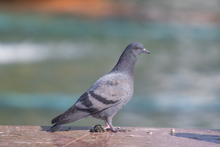 Wild gray blue close up, sitting on a blurred background.