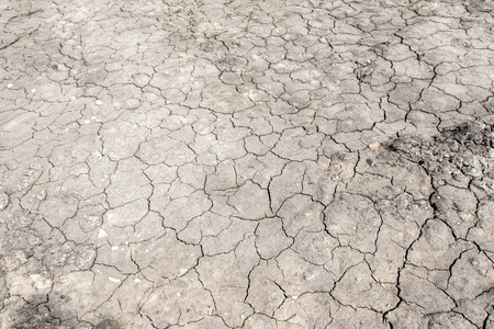 Gray background of dried cracked earth