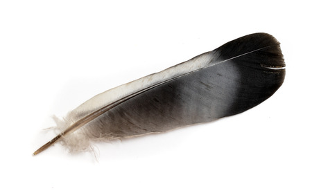 Feather of a bird on a white background. Reklamní fotografie - 124556600
