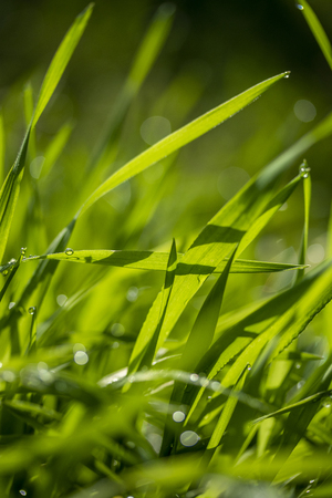 green grass in the sun, bokeh background of raindrops