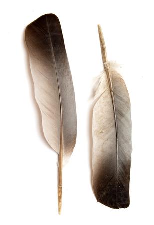 Feather of a bird on a white background. Reklamní fotografie