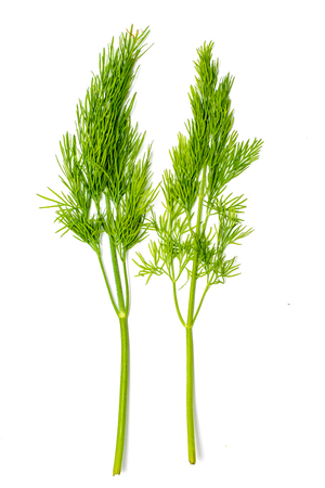 Dill. Fresh lettuce, green branches of dill isolated on white background. Vegan food. Studio macro. Stok Fotoğraf