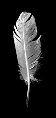 Feather of a bird on a black background.