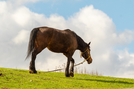 Horse in a green meadow against a blue sky