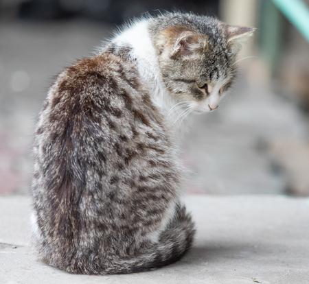 Domestic cat sitting on summer street, closeup.