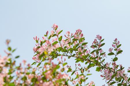 Green trees against the blue sky, summer landscape. 版權商用圖片