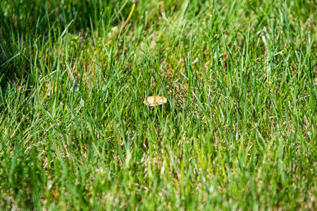 Mushrooms view from green grass, spring landscape. Reklamní fotografie
