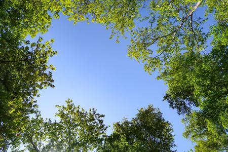 Groene bladeren van bomen bekijken van onderen tegen de blauwe lucht, lente natuur.