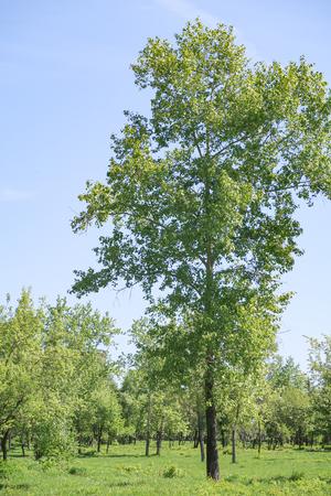 Landscape, green grass trees blue sky.