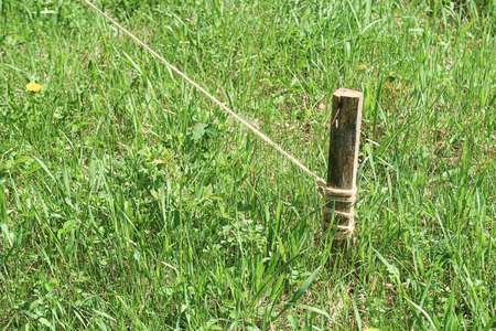 Wooden stake in the ground with a rope in the green grass.