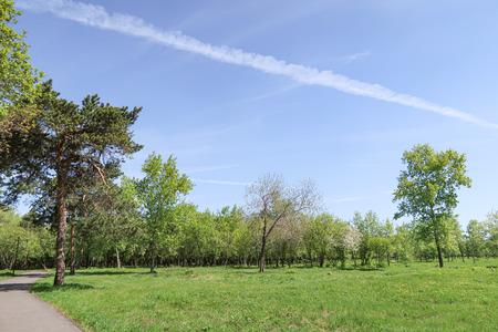 Landscape, green grass trees blue sky. Imagens - 124724400