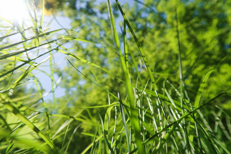 Green grass bottom view to the sky. Imagens - 124724404