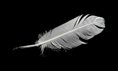 Feather of a bird on a black background. Stockfoto