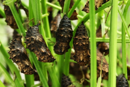 imago: Pupa farm Stock Photo