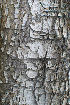 Tree bark closeup usable as texture photo
