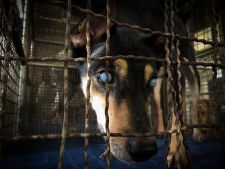 De hond slechtziend Stockfoto - 92943255
