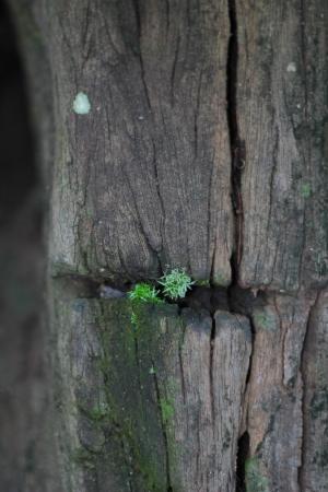 fungous: parasite plant on log