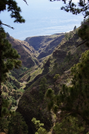 wild canary: Steep valley in volcanic terrain, pines and wild vegetation, blue sea and cliffs to the fund  Tinizara, La Palma, Canary Islands, Spain Stock Photo