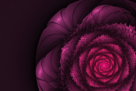 Black background with pink rose. Flower texture, fractal pattern. Marsala digital gear flower on dark purple backdrop.