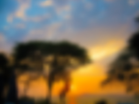 Sunset blurred background with black trees on orange background with blue sky, in vector