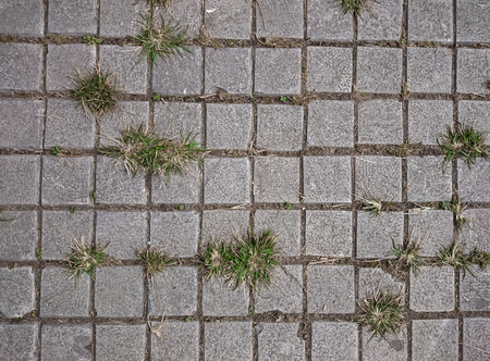 Square grey tiles on the floor with green grass and moss in the rifts. Rusty gray background with irregular bricks. Concrete pavement urban pattern. Cement tiled sidewalk outdoors. Foto de archivo