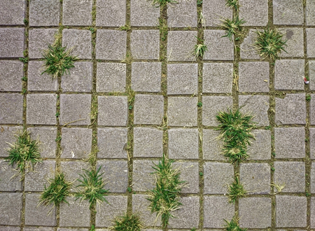 Square grey tiles on the floor with green grass and moss in the rifts. Rusty gray background with irregular bricks. Cement tiled sidewalk outdoors. Concrete pavement urban pattern.