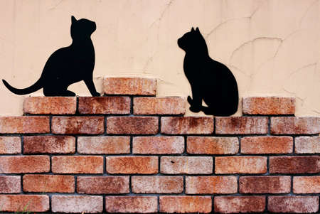 rubble: Wall and cat shadow