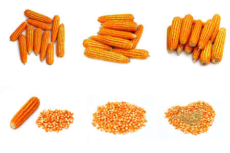 spadix: Dry corn set isolate Stock Photo