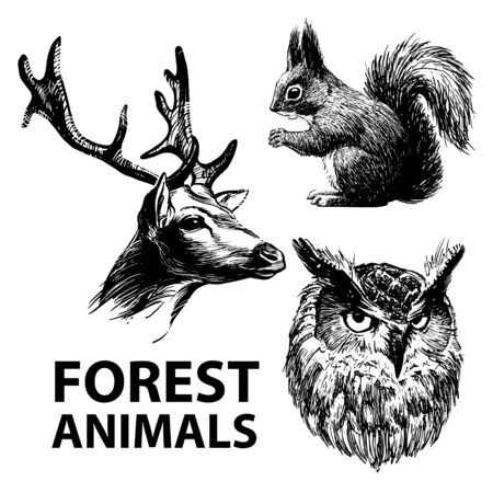 Set of ink drawn forest animals. Deer, squirrel and owl. Vector illustration