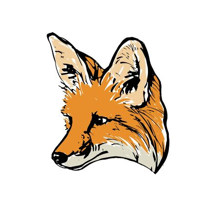 Realistic colored drawing of a fox head. For coloring. Vector illustration.
