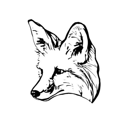 Realistic black and white drawing of a fox head. For coloring. Vector illustration.