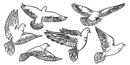 Set Birds in flight. Pigeons Isolated silhouettes and contours. Vector illustration Banco de Imagens - 148164422