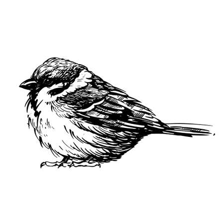 A bird drawn with a feather. Vector illustration Vetores