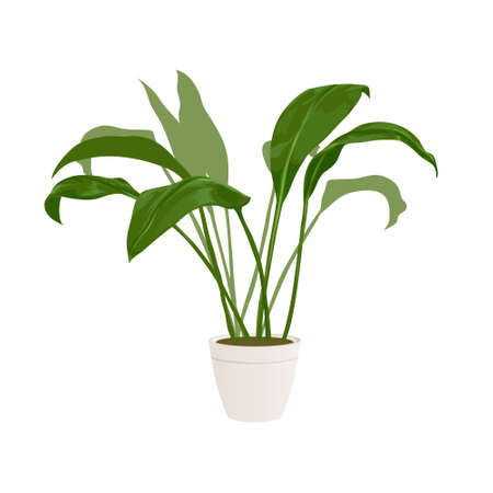 Realistic home or office plant for interior design and decoration. Tropical and exotic plant. Minimalistic style